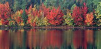 950000003 a panoramic view of trees in brilliant fall color and their reflection in mocassin lake in the upper penninsula of michigan united states