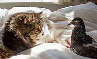 2012-09-18_Cat and Pigeon-Ziggy and Jean Minou