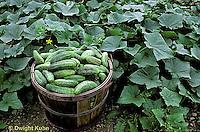 Vegetable Fruit Crops