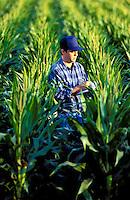 Farmer checks his crop of genetically modified corn.