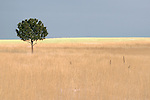 A lone tree stands in a winter field south of Denver, Colorado