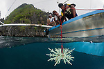 Coral Reef Rehabilitation