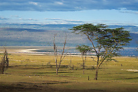 "Lake Nakuru National Park, close to Nakuru town, was established in 1961. Nakuru means ""dust or dusty place"" in the Maasai language. Thousands of pink flamingo fringe the shore of the soda lake and at times carpet the water in a swathe of pink. the forest around the park is also a rhino sancutary and home to over 400 migratory birds."