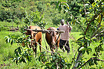 A man learns to manage a team of oxen at an agricultural school sponsored by the United Methodist Committee on Relief (UMCOR) in Kaminsamba, Democratic Republic of the Congo. Participants, some of whom stay at the center for several weeks, learn sustainable agricultural practices, animal traction, and beekeeping.