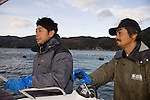 Takeshi Tachibana and Hiromitsu Ito of Oh! Guts! guides a boat to an area where he is farming scallops from the bay at Ogatsu, Ishinomaki, Miyagi Prefecture, Japan on 01 Dec 2011. .Photographer: Robert Gilhooly