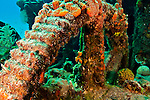 Coral Encrusted Gears, Doc Paulson, Grand Cayman