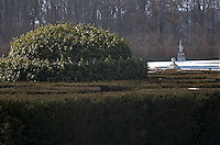 A dome-shaped topiary rises above the surrounding box-hedge in the ornamental garden