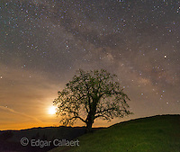 Milky Way, Coastal Live Oak, Quercus agrifolia, Los Padres National Forest, Big Sur, Monterey County, California