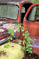 Old Ford pickup covered in lichen and stained by time, with a short arc of fresh greenery growing in front of it.