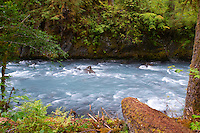 The Hoh River. The Hoh River trail in Olympic National Park starts in the mossy and lush Hoh Rain Forest. From there you climb over 5,000 ft. in elevation along towering trees and rock to overlook the windswept Blue Glacier on Mt. Olympus. Tracing your steps back to the Hoh River visitors center the hike covers over 36 miles of diverse climate and ecosystems ranging from temperate rain forest to alpine.