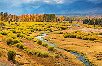Grand Teton National Park, WY: Stream flows through a grassy meadow at Blacktail Ponds with a line of cottonwoods backlit in the afternoon sun