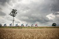 peloton plowing through the cornfields of Northren France under a threatening sky<br /> <br /> 2014 Tour de France<br /> stage 4: Le Touquet-Paris-Plage/Lille M&eacute;tropole (163km)