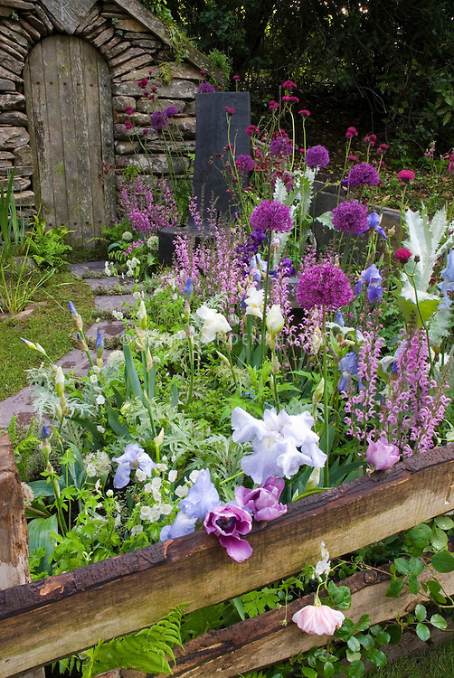 Purple Backyard Flowers : , purple, pink toned perennial garden, with fence  Plant & Flower
