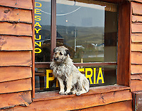 A wet dog shelters from the rain on a windowsill in El Chalten, Argentina.