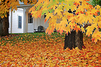 Fall color Norhern CA
