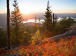 Idaho, North, Bonner County, Selkirk Mountains, Preist Lake.  Late summer huckleberry bushes glow in the setting sun above Priest Lake.