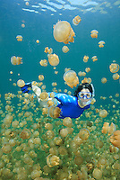 RH0034-D. woman (model released) swimming amongst Golden Jellyfish (Mastigias papua), perhaps Mastigias papua etpisoni, in world famous Jellyfish Lake, Palau. Millions of these jellies live in an isolated marine lake in the Rock Islands. Over time and in the absence of abundant predators, their stinging cells have lost most of their potency, and as a result, are generally harmless to people. Some scientists believe this may be a subspecies of the tropically widespread Spotted Jellyfish, others feel it may be a distinct species.<br /> Photo Copyright &copy; Brandon Cole. All rights reserved worldwide.  www.brandoncole.com