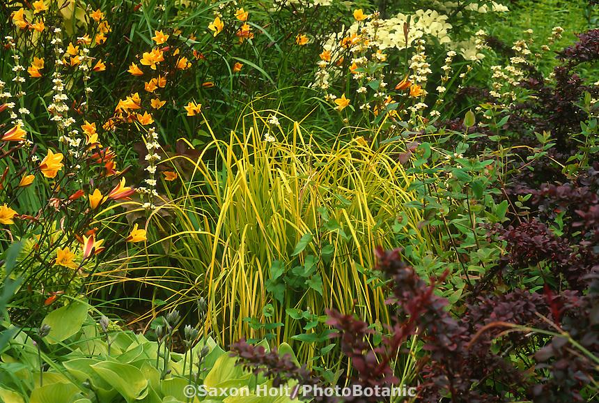 yellow foliage grass, Carex elata 'Aurea', Hemerocallis with daylily 'Corky', purple Berberis,  garden tapestry