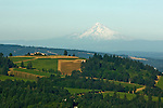 Aerial view over Willamette Valley with Mt. Hood in background, Oregon