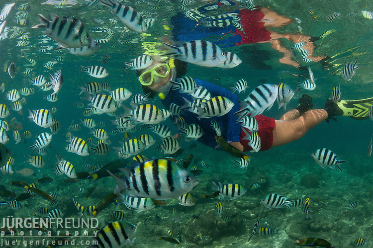 Snorkeler with abundant sergeant major damselfish jurgen for Freund s fish