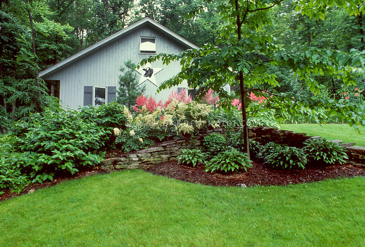 Mulched Tidy Garden Bed Landscaping With Hostas Under Tree In Shade .