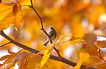 Finch & Warbler
