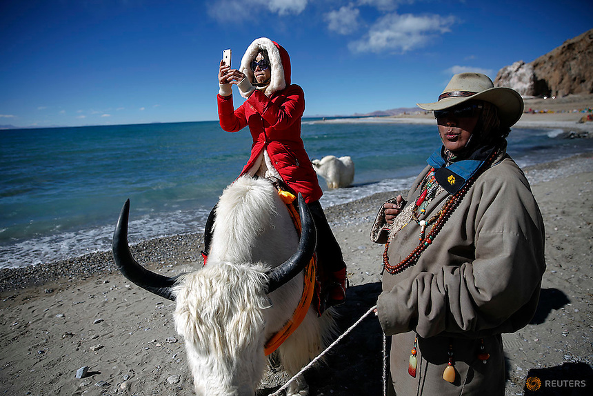 A tourist takes pictures while riding a yak held by a Tibetan man at Namtso lake in the Tibet Autonomous Region, China November 18, 2015. Located four hours' drive from Lhasa at an altitude of around 4,718m (15,479 ft) above sea level, Namtso lake is not only the highest saltwater lake in the world but also considered sacred attracting throngs of devotees and pilgrims. REUTERS/Damir Sagolj