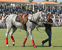 WELLINGTON, FL - MARCH 12:  Scenes from the early rounds of the 26 goal USPA Gold Cup at the International Polo Club, Palm Beach on March 12, 2017 in Wellington, Florida. (Photo by Liz Lamont/Eclipse Sportswire/Getty Images)