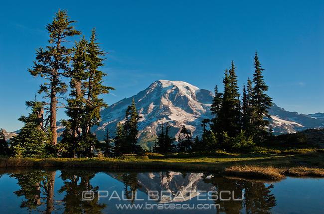 Mountain tarn reflecting Mount Rainier at dawn, Mount Rainier national park, Washington, USA , Plummer's Peak