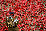 Marking the centenary of the beginning of the First World War (WW1) in 1914, General the Lord Dannatt stands among some of the ceramic poppies created by artist Paul Cummins.  Remaining in place until the date of the armistice on November 11th. Across the world, remembrance ceremonies for this historic conflict that affected world nations. General Francis Richard Dannatt, Baron Dannatt, GCB, CBE, MC, DL (born 1950) is a retired British Army officer and the incumbent Constable of the Tower of London.