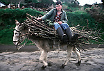 A teenager returns from his fields with a load of kindling wood on donkey back in Terceira, Azores. Far out in the Atlantic Ocean, some 850 miles off the western coast of Lisbon, Portugal lies the 425-mile long archipelago of the Azores. (Jim Bryant Photo).....