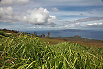 A sugar cane field growing on the island of Maui.