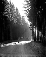 Pfc. Margerum, Philadelphia, Pa, walks the road through a peaceful forest in the Bastogne area, as he returns from the front lines.  Belgium or Luxembourg.  December 27, 1944.  Pfc. Donald R. Ornitz.  (Army)<br /> NARA FILE #:  111-SC-199296<br /> WAR &amp; CONFLICT BOOK #:  1076