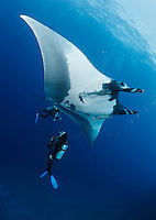 QT2373-D. Manta Ray (Manta birostris) swims over scuba diver (model released). Baja, Mexico, Pacific Ocean.<br /> Photo Copyright &copy; Brandon Cole. All rights reserved worldwide.  www.brandoncole.com