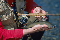 Fly fisherman holds Arctic grayling, Chatanika river, Fairbanks, Alaska