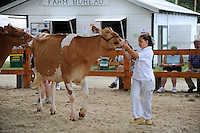 Girl with cow in cattle show at Cheshire Fair in Swanzey, New Hampshire USA