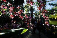 Women watch orchids during the Orchid show at the botanical garden in Bronx, New York. March 18, 2014. Photo by Eduardo Munoz Alvarez/VIEW