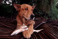 """When Palmyra Atoll changed hands, two dogs were left on the atoll to fend for themselves.  The dogs realized if they worked together they could herd baby black tip sharks into shallow water and eat them to survive.  The largest purchase to date for the Nature Conservancy is the Palmyra an atoll situated about 300 miles north of the equator.  Palmyra has five times as many coral species as the Florida Keys and three times as many as Hawaii.  It is home to the world's largest invertebrate, the rare coconut crab, and a population of red-footed booby birds second only to that of the Galapagos.  It is the last marine wilderness area left in the U.S. tropics and is home to the last remaining stands of Pisonia grandis beach forest in the world.  Palmyra was a US Navy supply base in World War II, the site of a proposed nuclear waste dump, an unsuccessful coconut plantation and of various development schemes.  Palmyra is most famous for the 1974 slaying  of a married couple which became the subject of the best-selling book """"And the Sea Will Tell,"""" by Vincent Bugliosi."""