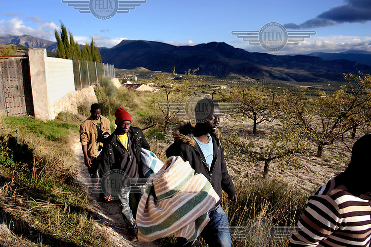 A group of Sub-Saharan illigal migrants walk a small pathway, away from the main routes, to avoid the police. They are seeking work picking olives. The picking season starts in November when thousands of seasonal workers arrive to work in the olive groves. This is work usually carried out by migrants from overseas but the collapse in Spain's economy and rocketing levels of unemployment has led to many Spaniards seeking to work as pickers, labour they had previously shunned.