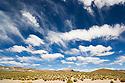 Bolivia, Altiplano, storm clouds above Altiplano grassland