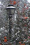 Snowy lightpost standing amidst an orange berry bush