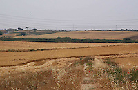 Campo arato di grano. Plowed field of grain...