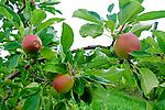Heartland - King Orchards - Elk River Michigan