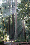 Big Basin Redwoods SP, CA