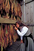 Drying tobacco in a barn. Woman. Strasburg Pennsylvania USA Lancaster County.