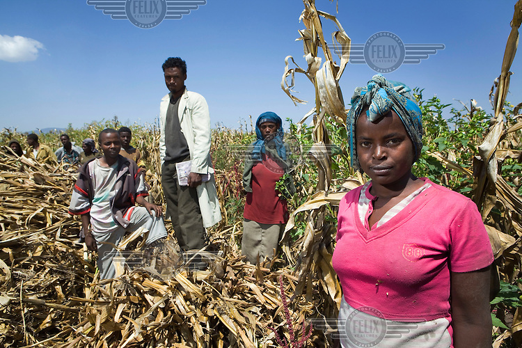 Farm labourers, who earn less than a dollar a day, hand harvesting maize in order to collect the seeds for replanting, at the Jittu farm. The Saudi based oil and construction billionaire Sheik Mohammed Al Amoudi owns this farm. He was born in Ethiopia and now owns 100 million hectares of agricultural land in the country and has plans to invest in another two million hectares. The crops that are grown on his land are mainly exported.
