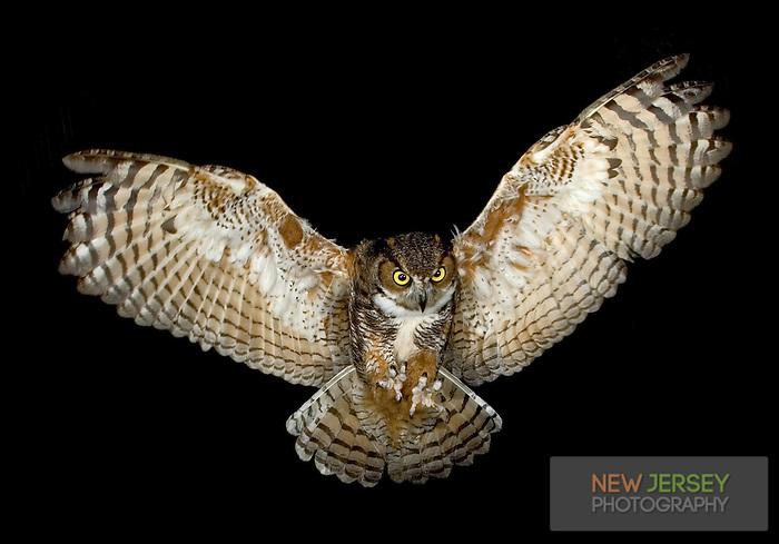 Great Horned Owl Flying Tattoo Great Horned Owl Flying