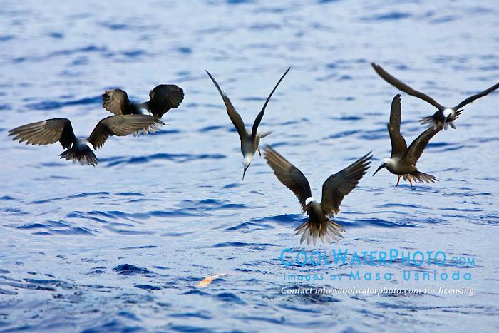 Bird Hunting Hawaii Big Island
