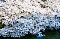 Couple taking photos of spectacular sea of Cherry blossom by boat on the moat around Tokyo`s Royal Palace. Know as Ohanami ( or Cherry blossom viewing )in Japan.