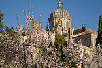 Cathedral from Calixto and Melibea Garden, Salamanca, Castile and Leon, Spain
